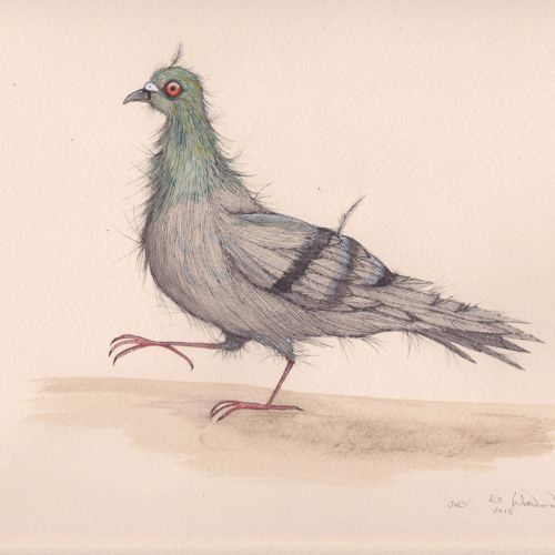 Pigeon illustration by Emily Carew Woodard
