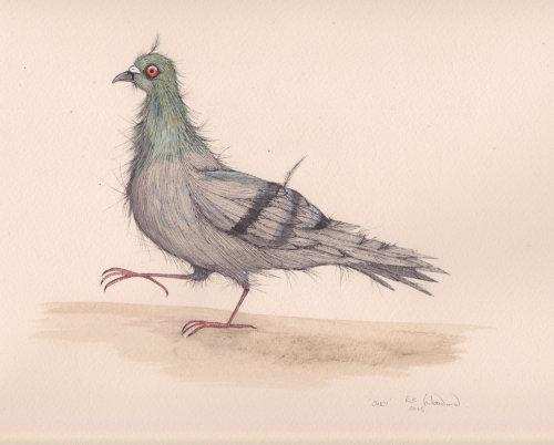 Ilustração de pombo por Emily Carew Woodard