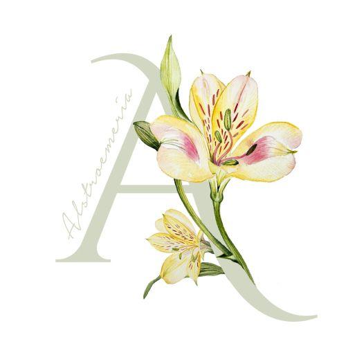 Flower alphabet contemporary design