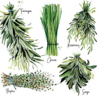 Watercolour art of herbs list