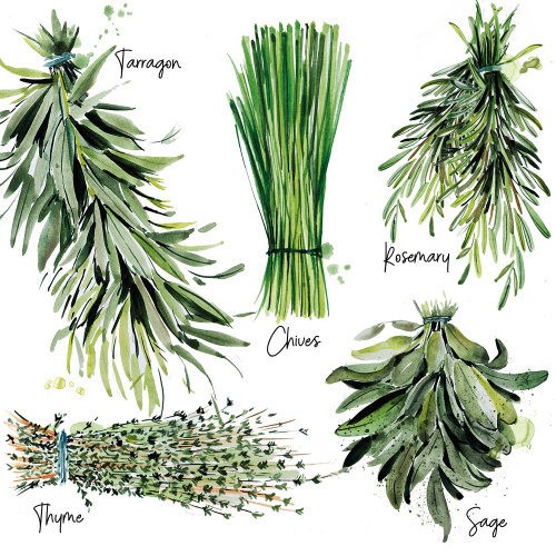 Watercolour art of herbs list