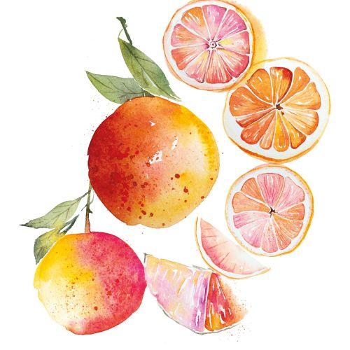 Grapefruits illustration by Enya Todd