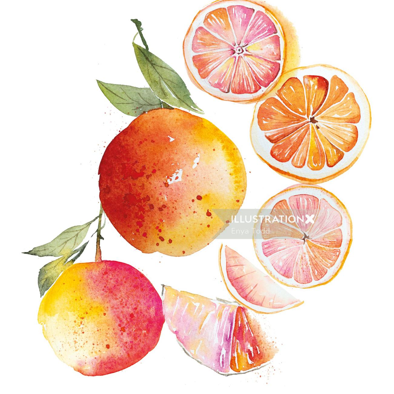 Grapefruits illustration by Enya Todd