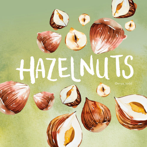 Illustration of Hazelnuts