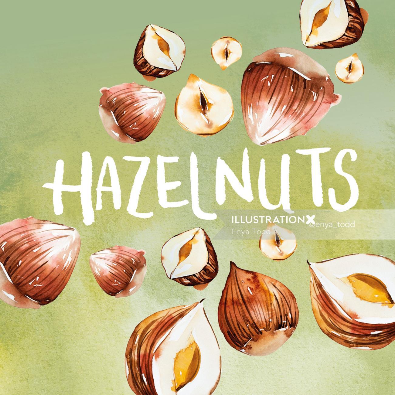 Illustration of Hazelnuts