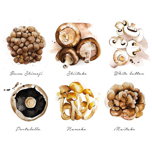 The culinary mushrooms list