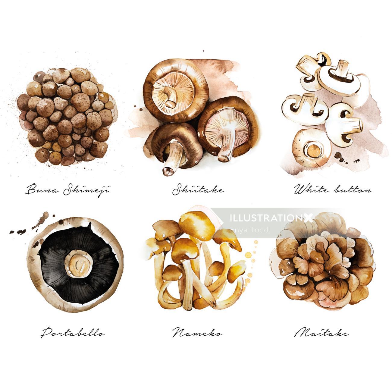 The culinary mushrooms list