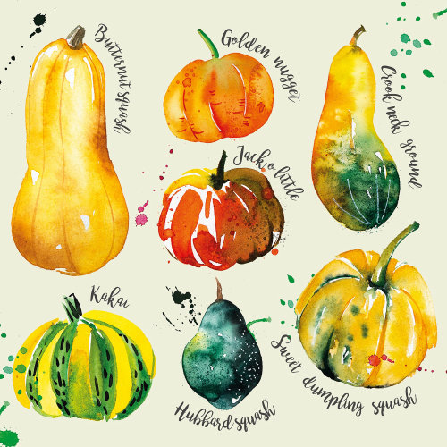 Illustration Winter squash