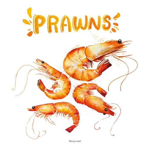 Food illustration of Prawns