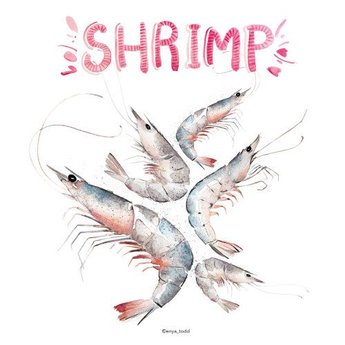 Food illustration of Shrimps