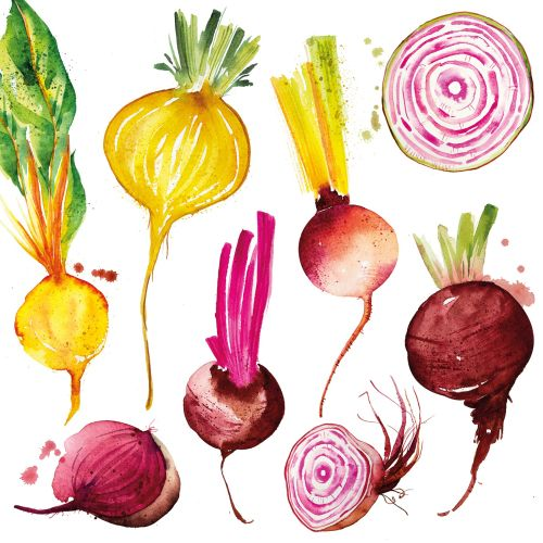 Beetroots illustration