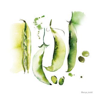 Illustration of Beans