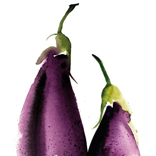 Illustration of Aubergines