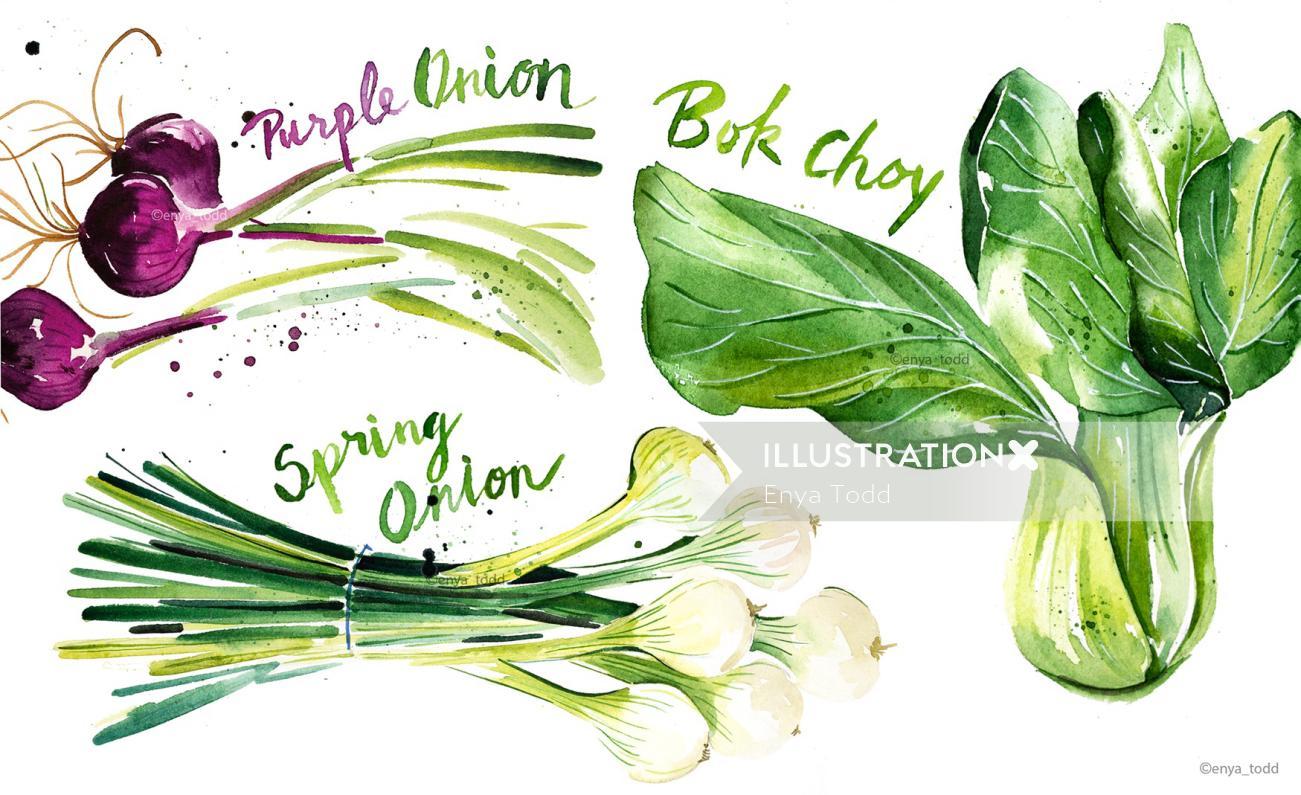 Food & Drink Green veggie