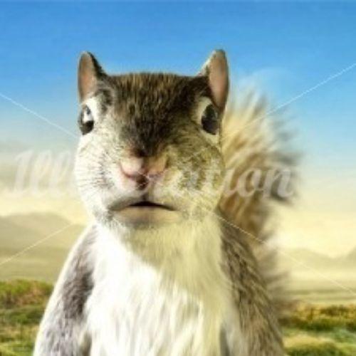Animal illustration of squirrel