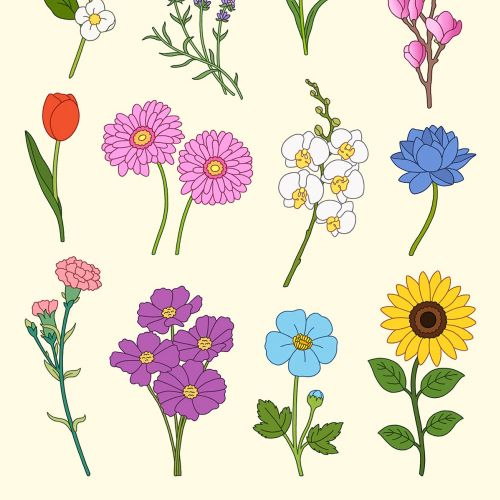 Collage of Illustrated Flowers