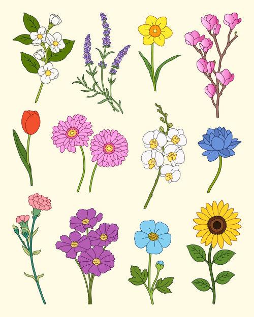 Collage de flores ilustradas