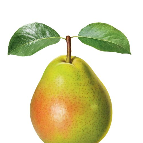 Food & Drink Pear fruit