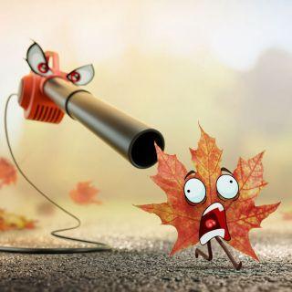 FOREAL Cartoon & Humour