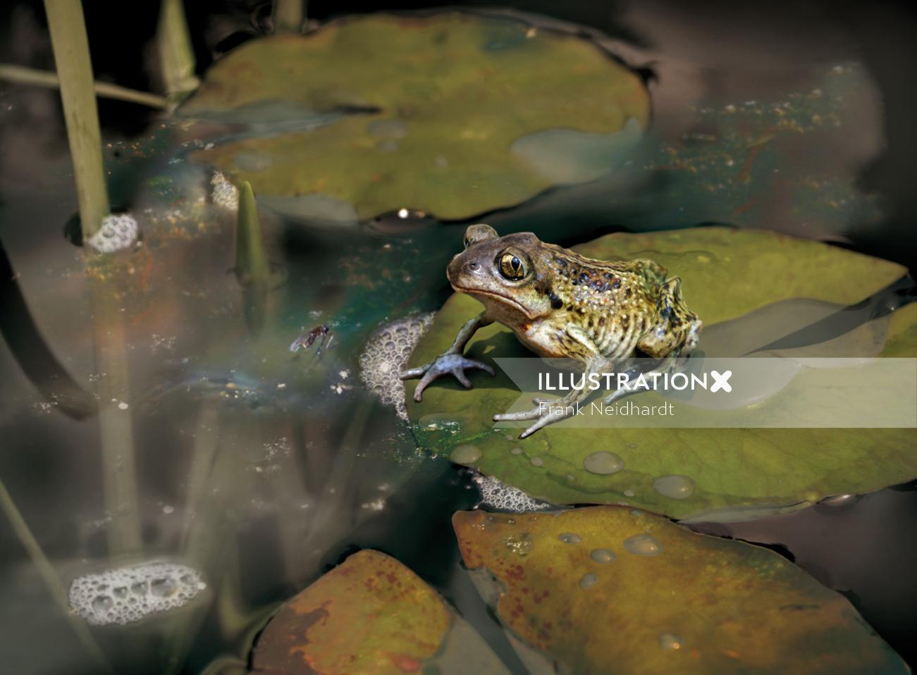 Depressed frog staring