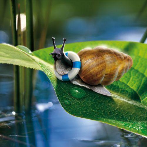 Happy snail on leaf