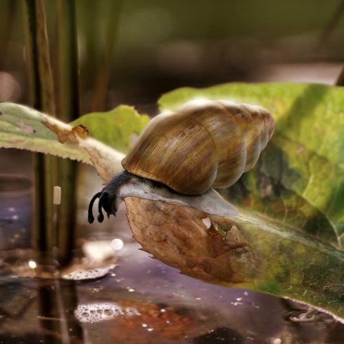 Ill snail on rotten leaf