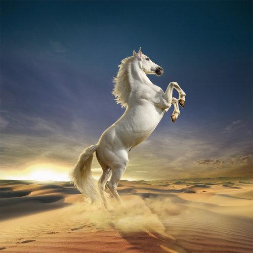 White horse standing in desert