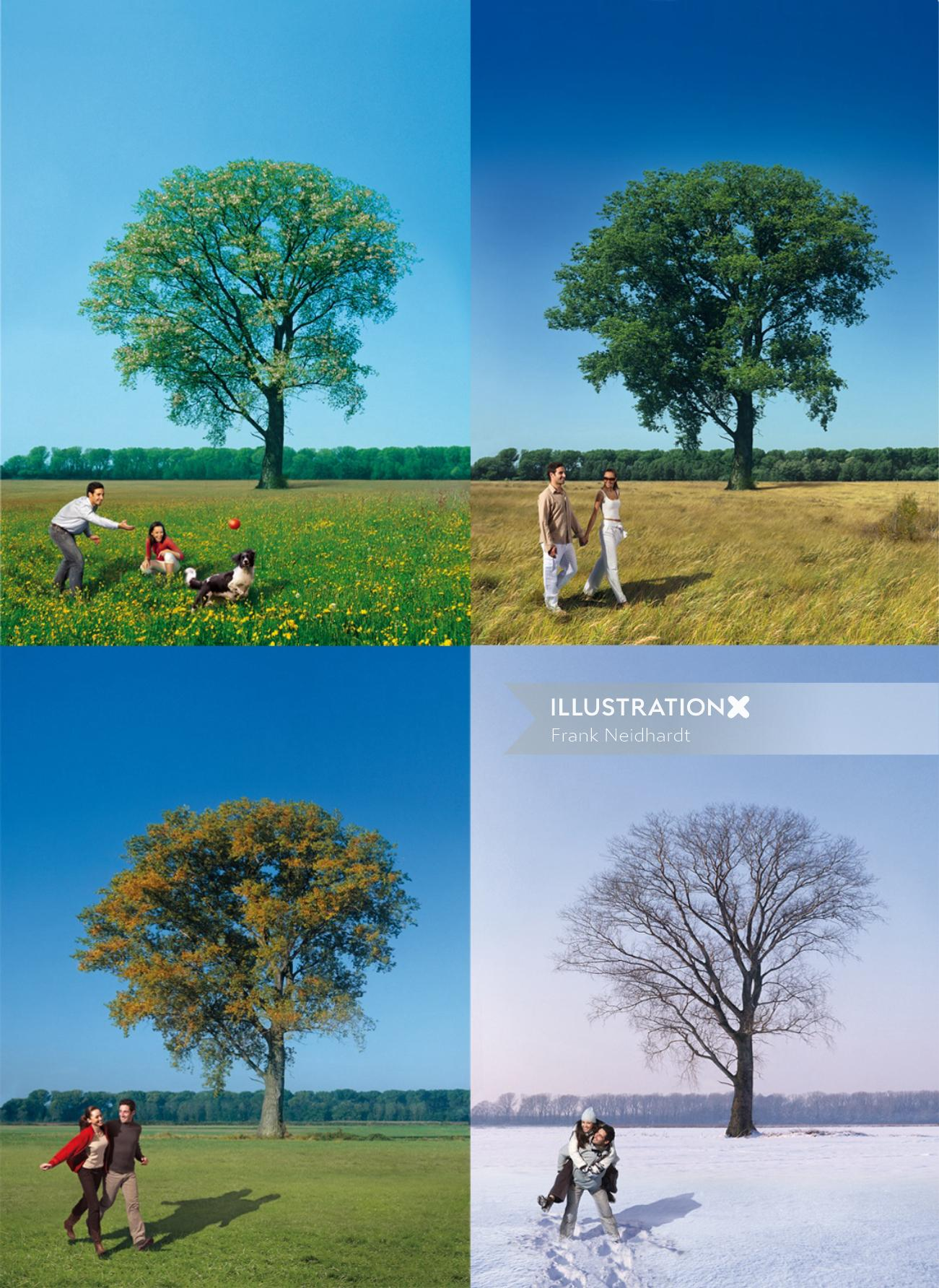 Tree in different seasons
