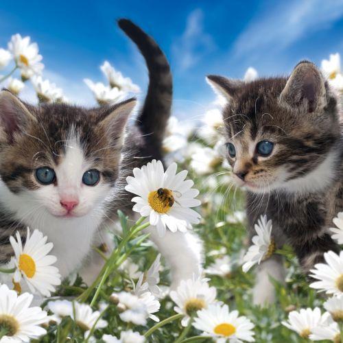 Cute Kittens in flower garden