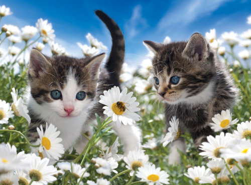 Cute Kittens in flower garden