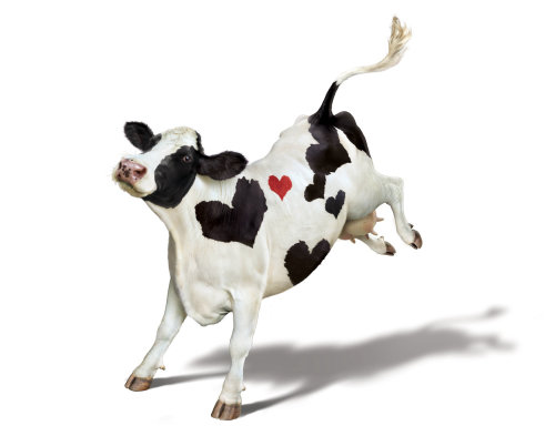 Happy cow with Heart symbol