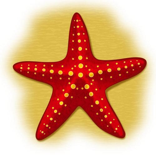 Graphic Star Fish