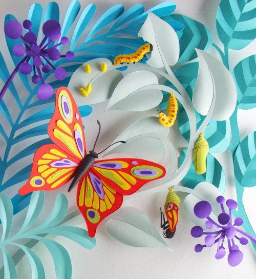 Arte de papel del ciclo de vida de la mariposa para la revista Brio