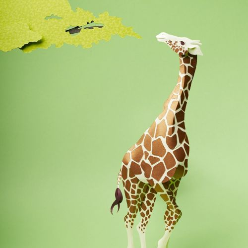 Illustration of Giraffe about to eat from the leaves of a tree