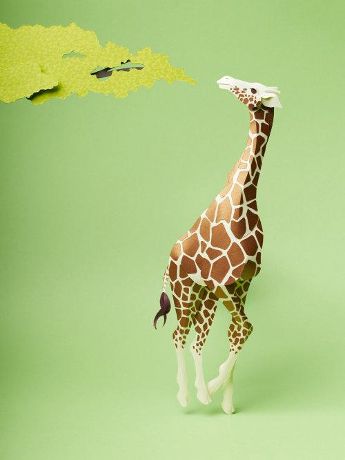 Ilustración de jirafa a punto de comer de las hojas de un árbol
