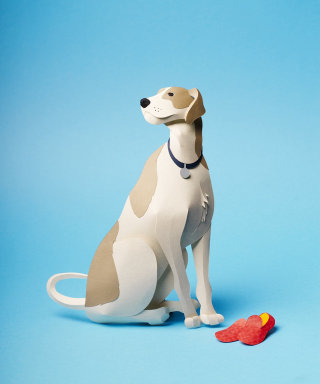 A pet dog sits with slippers 3D paper art illustration by Gail Armstrong