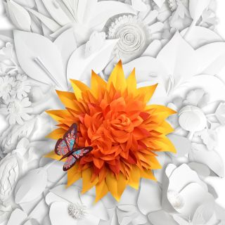 illustration of butterfly on dahlia flower
