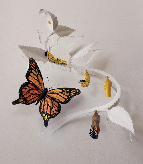 Ilustración del ciclo de vida de la mariposa