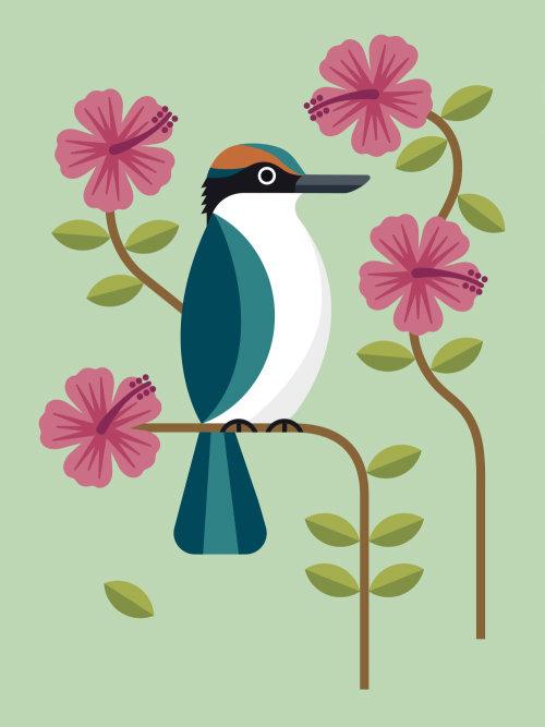 Kiwi bird vector art