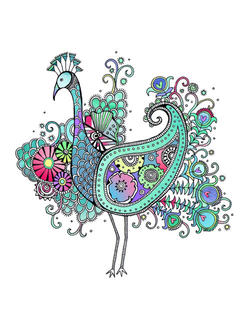 Peacock illustration by Hannah Davies