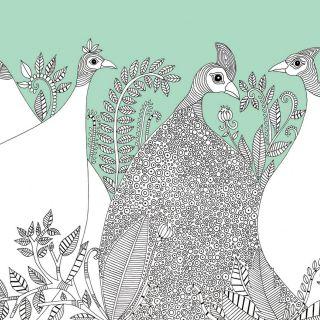 Hannah Davies 动物与自然