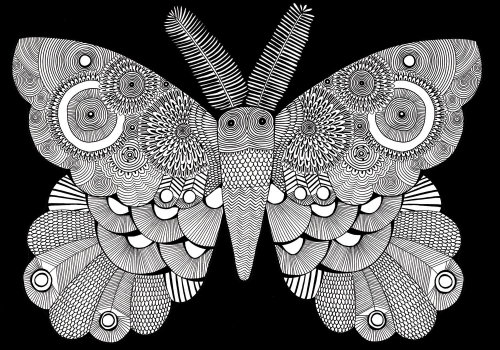 Moth illustration by Davies hannah