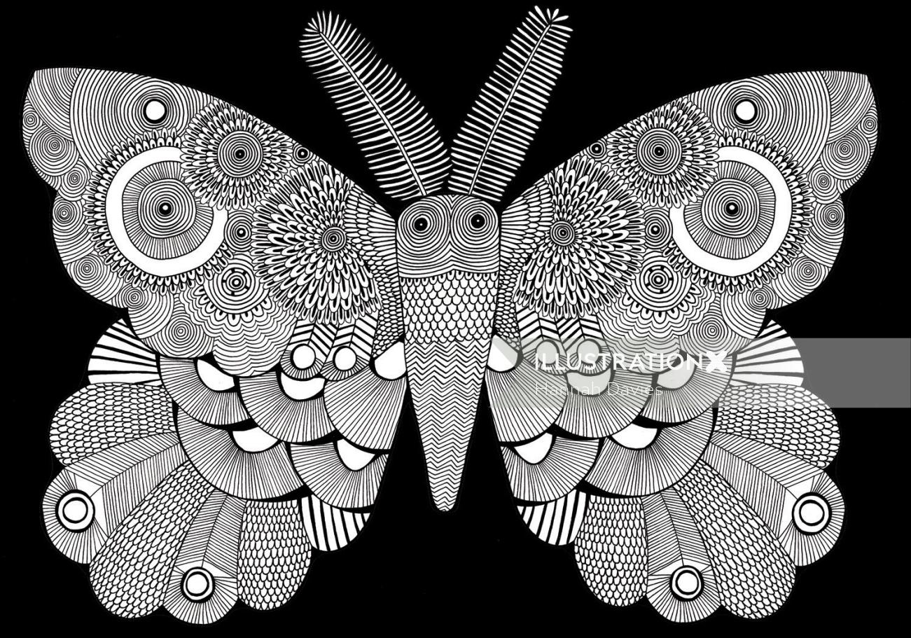 Moth illustration by Davies hannah