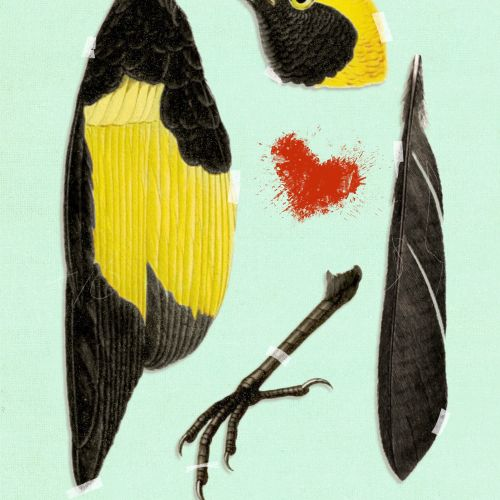 Beautiful Murder illustration of bird by Heather Landis