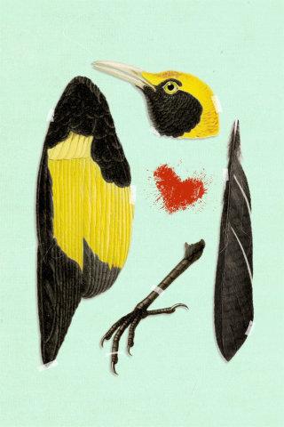 Beautiful Murder illustration of bird by Heather Landis