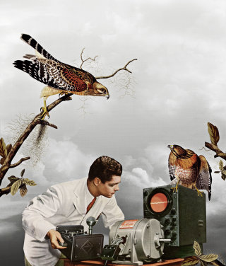 Man listening to birds beat illustration by Heather Landis