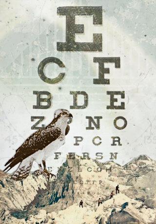 An illustration of eagles sitting on rocks