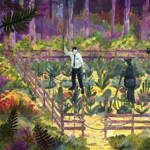 Henry McCausland Nature