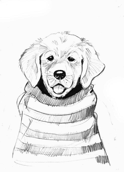 Sketch art of puppy dog