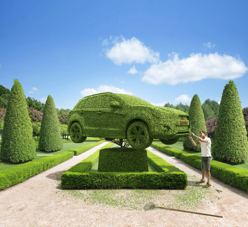 Green shrub with car shaped